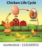 chicken life cycle concept | Shutterstock .eps vector #1132183913