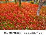 sakyoku ku  kyoto city in late... | Shutterstock . vector #1132207496
