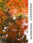 sakyo ku  kyoto shi late autumn ... | Shutterstock . vector #1132209203