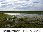 waterlilies floating on the...   Shutterstock . vector #1132220828