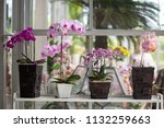 phalaenopsis orchid in the... | Shutterstock . vector #1132259663