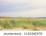 vegetation on the beach and a... | Shutterstock . vector #1132282970