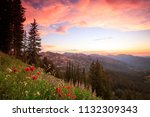 Wildflower Sunset In The...