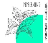 peppermint vector sketch...   Shutterstock .eps vector #1132318586