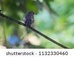 sparrow on tree at park | Shutterstock . vector #1132330460