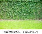 Green Ivy On Wall With Grass