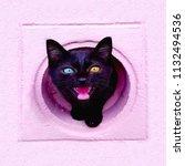Stock photo odd eyed black cat 1132494536