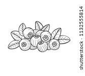 bilberry   vector hand drawn... | Shutterstock .eps vector #1132555814