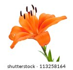 Orange Lily. Isolated On White...
