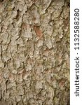 brown spruce bark texture .   Shutterstock . vector #1132588280