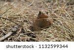 a little toad | Shutterstock . vector #1132599344
