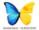 Stock photo a large butterfly with two large bright wings of blue and yellow is isolated on a white background 1132612220