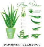 aloe vera pots.illustration... | Shutterstock .eps vector #1132619978