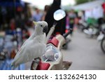 beautiful bird at thailand. | Shutterstock . vector #1132624130