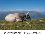 free cow on the mountain | Shutterstock . vector #1132659806