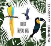 colorful tropical birds over... | Shutterstock .eps vector #1132664366