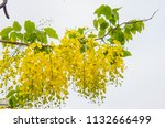 the branch of multiply or... | Shutterstock . vector #1132666499