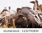zebras migration   ... | Shutterstock . vector #1132742834