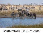 zebras migration   ... | Shutterstock . vector #1132742936