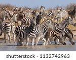 zebras migration   ... | Shutterstock . vector #1132742963