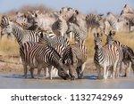 zebras migration   ... | Shutterstock . vector #1132742969