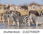 zebras migration   ... | Shutterstock . vector #1132743029