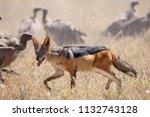zebras migration   ... | Shutterstock . vector #1132743128
