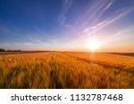 green field and beautiful sunset | Shutterstock . vector #1132787468