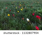 green field with different and... | Shutterstock . vector #1132807904