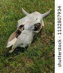 white skull of cattle on green... | Shutterstock . vector #1132807934