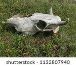 white skull of cattle on green... | Shutterstock . vector #1132807940