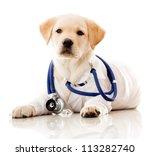 Little Dog As A Vet Wearing...