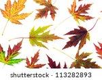 autumn maple leaves on white   Shutterstock . vector #113282893