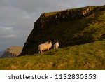 sheep and a lamb grazing on the ... | Shutterstock . vector #1132830353