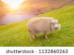 sheep looking at camera  sheep... | Shutterstock . vector #1132860263