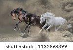 Bay  Black And White Horses...