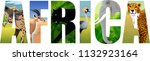 vector africa illustration with ... | Shutterstock .eps vector #1132923164
