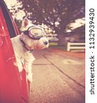 cute west highland terrier with ... | Shutterstock . vector #1132939430