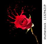 Red Rose With Red Splashes On...