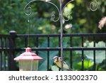 blue jay bird songbird flying... | Shutterstock . vector #1133002370