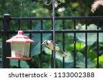blue jay bird songbird flying... | Shutterstock . vector #1133002388