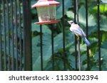 blue jay bird songbird flying... | Shutterstock . vector #1133002394