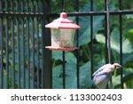 blue jay bird songbird flying... | Shutterstock . vector #1133002403