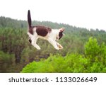 Stock photo cute cat flying and falling in the nature closeup 1133026649
