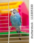 Blue Budgerigar Sitting On The...