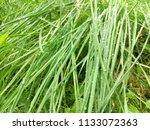wet long grass. bright green....   Shutterstock . vector #1133072363