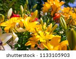 lilies in a colorful garden | Shutterstock . vector #1133105903