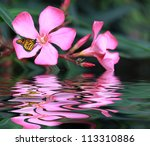 Stock photo butterfly on a flower 113310886