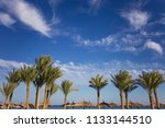 beautiful green palm trees... | Shutterstock . vector #1133144510