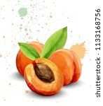 apricot watercolor vector.... | Shutterstock .eps vector #1133168756